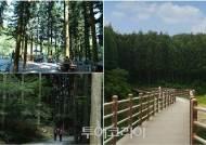 장성 축령산의 보물 '편백숲'에서 건강한 여름나기