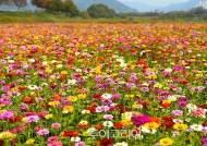 꽃으로 장식되는 장성 황룡강...다채로운 테마 정원 조성