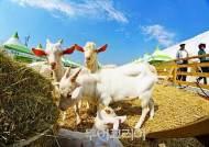 남도한바퀴, 국제농업박람회·운주사·영산강금빛갈대밭 경유 특별코스 운영