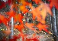 4대궁·종묘·조성왕릉 숲길에서 단풍놀이 즐기며 가을 정취 만끽!