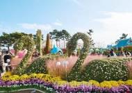가을꽃의 대향연 '거제섬꽃축제'
