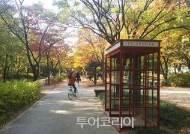 이번 주말 서울 도심 산·강·성곽·문화명소 달려볼까!..서울 첫 국제 트레일러닝 대회 열려