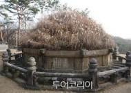 '억새 절정기' 맞은 태조 건원릉 이번 주말부터 약 한달간 특별 개방