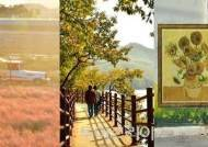 만추에 걷기 좋은 장성 가을 명소 3선