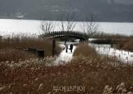 황금빛 갈대에 내려앉은 하얀 눈! 서천 신성리갈대밭으로 겨울 낭만 여행