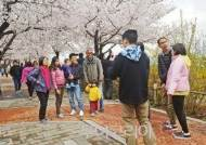 벚꽃놀이 오지마라!..국회 여의서로 일대 전면폐쇄. 여의도한강공원 주차장 폐쇄