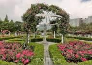 '고양시 일산호수공원 장미원, 아름다운 향기와 색잔치 시작!'