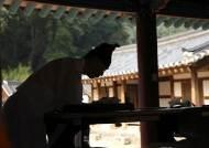 7월엔 운치 가득한 세계유산 '한국의 서원' 여행!