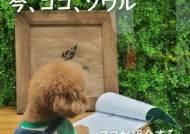 한국관광공사, 반려동물 감성마케팅으로 일본시장 공략