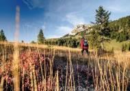 스위스 알프스 빙하 따라 컬러풀한 숲을 걷다