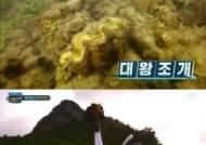 태국 국립공원 측, '정법' 이열음 대왕조개 채취에 경찰 조사 요청