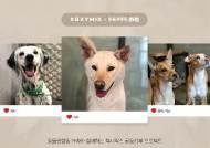 젝시믹스, 유기견-유기묘 돕는 '동물권행동 카라'에 매출 1% 기부