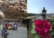 '계곡 물은 녹고, 꽃은 활짝'…어느새 성큼 다가운 봄