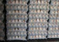'못 먹는' 계란, 버젓이 유통…수백만개 우리 입으로