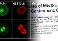 암 등 유전질환 치료길 열리나…유발원인 단서 찾아