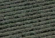전통 방식 그대로…'왕의 녹차' 봄맞이 수확 시작