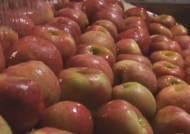 살찌기 싫으면 사과 껍질채 먹어라…비만 억제 성분