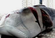 1억의 유혹…불법포획 밍크고래, DNA 검사에 딱 걸려