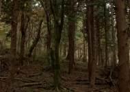 피톤치드 흠뻑…제주 '숫모르 편백 숲길' 한번 걸어볼까