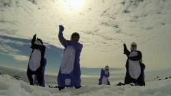 눈과 얼음의 세상, 여름 남극에 울려퍼진 '강남스타일'