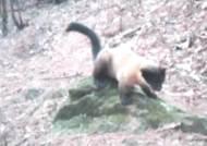 '산불 위험' 지리산, 입산 통제하니…'야생동물 천국'