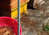 장어 1만 마리·꿀벌도 의문의 떼죽음…'정말 미스터리하네!'