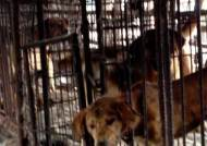 복날 보신탕? 도살장 개들은 오물 쓴 채 고통스러운 죽음