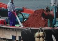 적조 방제용 '황토', 바다 생태계 망친다? 해외에서는…