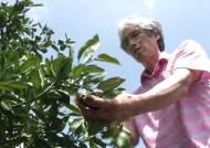 제주, 최악의 가뭄에 시름…'타들어 가는 농심'