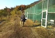 따오기 박사의 새 도전, 낙동강 두루미 복원