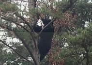 지리산 '야호' 금지!…겨울잠에 들기 시작한 반달곰