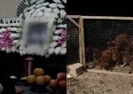 """""""오죽했으면 자살을…"""" 닭 출하 묶인 농민, 극단 선택"""