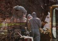 잠잠해진 줄 알았더니…영암·화성 AI 확진, 재확산되나