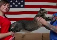 식탐 길냥이, 공룡 고양이로 유명세…몸무게만 9.5kg