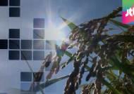 수입쌀 가려낸다…벼·콩 품종 바코드 인식 기술 개발