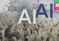 """""""AI 바이러스, 국내서 자생적으로 변종됐을 가능성"""""""