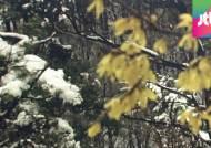 '5월의 눈' 흩날린 대관령…33년 만의 가장 늦은 눈