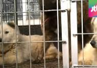 '야산에 동물농장?'…100억 원대 불법 가축 경매 적발