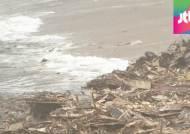 태풍 후폭풍…폐목재 밀려온 해운대, 쓰레기 몸살 진양호