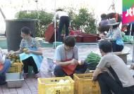'폭우 피해' 부산 기장군의 추석맞이…합동차례 준비