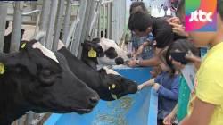 도심에 젖소?…쌓이는 우유 재고에 소비 짜내기 안간힘