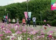 가을 정취에 빠져볼까…남도 꽃축제, 나들이객 '북적'