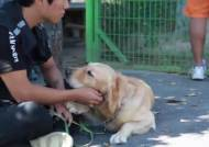 개 습격 사건 … 노려보지 마라, 물린 사람도 과실책임 있다