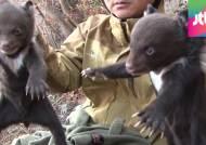 아기 반달곰 3마리, 지리산 품으로…총 34마리로 늘어