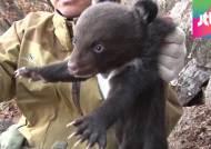"""아기 반달곰 셋, 지리산 품으로…""""곰 만나면 피하세요"""""""