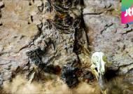 육식공룡 '골격 화석' 국내 첫 발견…학술적 의미 커