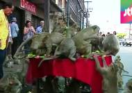 [사진] 원숭이들을 위한 진수성찬 '몽키 뷔페 페스티벌'