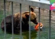 사자 이어 반달곰까지 죽어나간 동물원, 직접 가보니…