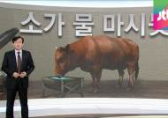 [앵커브리핑] '소가 물 마시듯'…다산 정약용의 당부