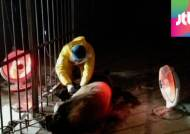 중국서 '판다' 전염병 비상…한 달 사이 두 마리 폐사
